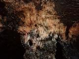 Postia placenta image