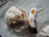 Tricholoma serratifolium image