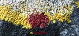 Caloplaca decipiens image