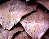 Sphaeropsis sapinea image